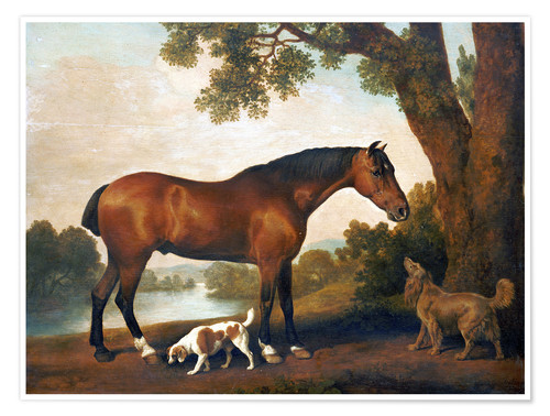 Poster Horse and two dogs