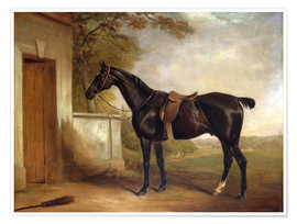 Premium poster Buckle, Lord Chesham's hunting horse, 1836