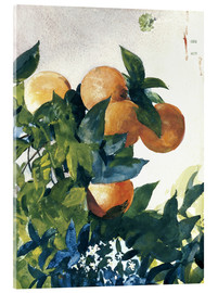 Acrylic print  Oranges on a Branch - Winslow Homer