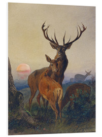 Foam board print  A Stag with Deer at Sunset - Charles Jones