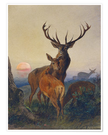 Premium poster A Stag with Deer at Sunset