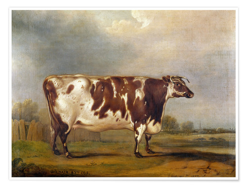 Premium poster Wildair, an 8-year-old cow in a river landscape, 1827