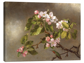 Canvas print  Apple Blossoms and a Hummingbird - Martin Johnson Heade
