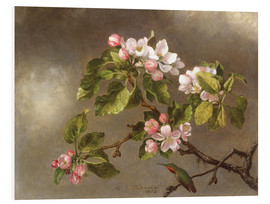 Foam board print  Apple Blossoms and a Hummingbird - Martin Johnson Heade