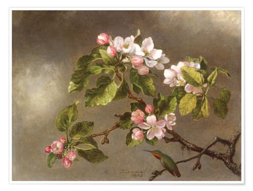 Premium poster Apple Blossoms and a Hummingbird