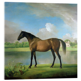 Acrylic print  Hunter of Viscount Bolingbroke - George Stubbs
