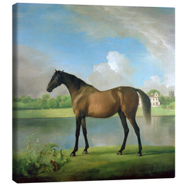 Canvas print  Hunter of Viscount Bolingbroke - George Stubbs