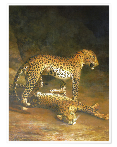 Poster Two Leopards lying in the Exeter Exchange