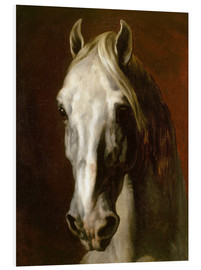 Foam board print  Head of a white horse - Theodore Gericault