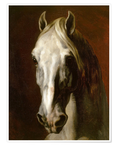 Premium poster Head of a white horse