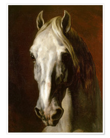 Poster Head of a white horse