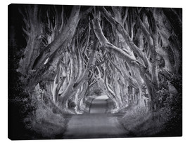 Canvas  The Dark Hedges - Carsten Meyerdierks
