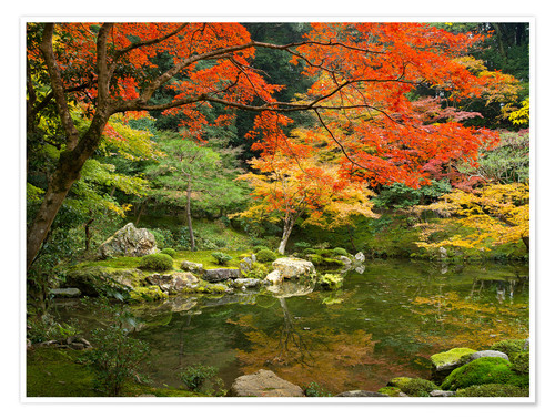 Premium poster Japanese garden in autumn with red maple tree