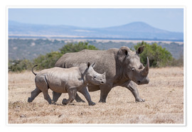 Premium poster White rhino with baby