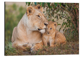 Aluminium print  Mother love at the lion - Ingo Gerlach