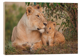 Wood print  Mother love at the lion - Ingo Gerlach