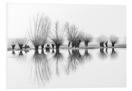 Foam board print  Willow trees in the mirror image of the flood - Ingo Gerlach