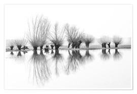 Premium poster  Willow trees in the mirror image of the flood - Ingo Gerlach