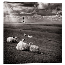 Acrylic glass  Talking Sheep - Carsten Meyerdierks