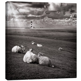 Canvas  Talking Sheep - Carsten Meyerdierks