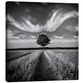 Canvas  Tree and Clouds - Carsten Meyerdierks