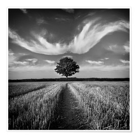 Premium poster  Tree and clouds - Carsten Meyerdierks