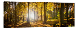 Acrylic print  Autumn forest backlit with sunshine and yellow autumn leaves - Jan Christopher Becke