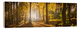 Wood print  Autumn forest backlit with sunshine and yellow autumn leaves - Jan Christopher Becke