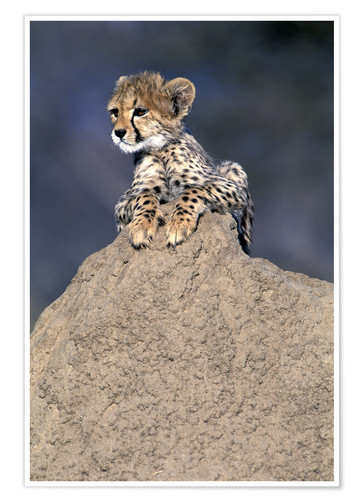 Premium poster Cheetah baby on a stone