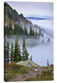 Canvas print  Mount Whistler between clouds - MFR