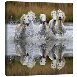 Canvas  Camargue horses - Adam Jones