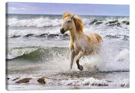 Canvas  A Camargue horse running in the surf - Adam Jones