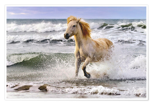 Premium poster Camargue horse between waves