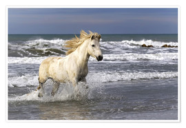 Poster  Camargue horse in the surf - Adam Jones