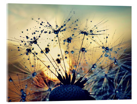 Acrylic glass  Dandelion in the sunset - Julia Delgado