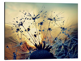 Aluminium print  Dandelion in the sunset - Julia Delgado