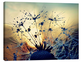 Canvas  Dandelion in the sunset - Julia Delgado