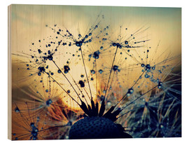 Wood print  Dandelion in the sunset - Julia Delgado