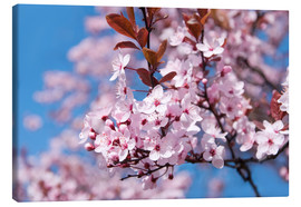 Canvas  pink cherry blossom - bildpics