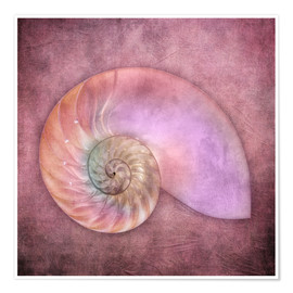 Premium poster  Sea shell - INA FineArt