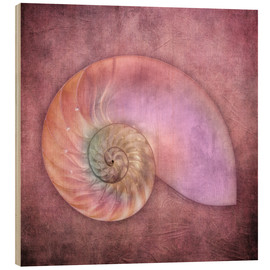 Wood print  Sea shell - INA FineArt