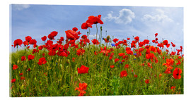 Acrylic glass  Poppies Panoramic - Melanie Viola