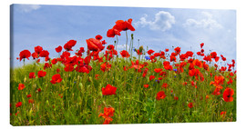 Canvas  Poppies Panoramic - Melanie Viola