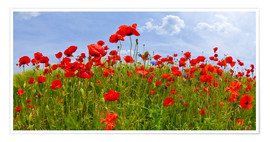 Premium poster Poppies Panoramic