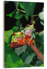 Wood print  Rotaugenlaubfrosch-couple - David Northcott