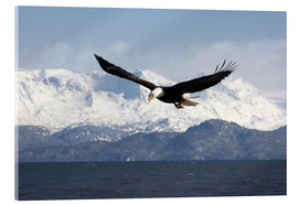 Acrylic glass  Bald Eagle in Flight - David Northcott