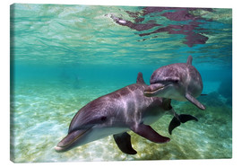 Canvas  Two bottlenose dolphins from the beaches of the Caribbean - Stuart Westmorland