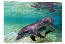 Forex  Two bottlenose dolphins from the beaches of the Caribbean - Stuart Westmorland