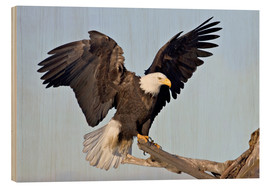 Wood  A bald eagle with outstretched wings - Charles Sleicher