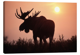 Canvas print  Moose at sunset - Steve Kazlowski